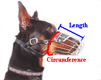 Dog Muzzle Sizing